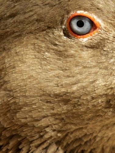 约旦首都安曼鸟类公园的动物表情(组图)