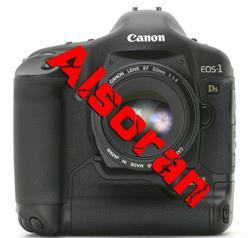 横扫高端十大最受欢迎的单反数码相机