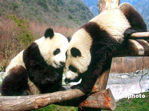 狗年贺岁新春大熊猫团团圆圆装机配置推荐
