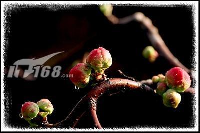 又到春花烂漫时:花卉摄影技巧纵横谈