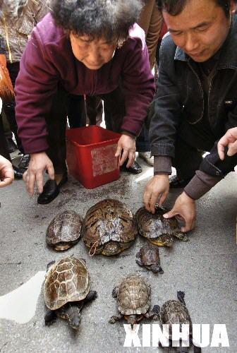 南京举办宠物龟相亲会百只乌龟找对象(图)