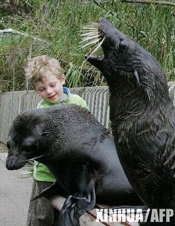 澳大利亚动物园里到处溜达的海豹(组图)
