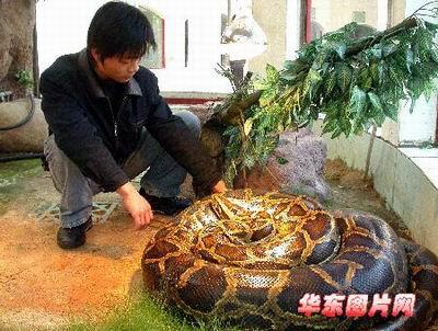 [动物世界]蟒蛇(喜欢的朋友进来看)