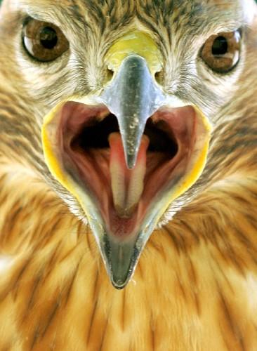 科技时代_约旦首都安曼鸟类公园的动物表情(组图)