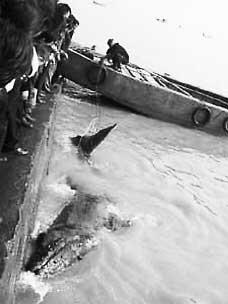 科技时代_福建连江一鲸鱼搁浅官兵村民成功施救