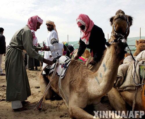 科技时代_科威特机器人代替儿童担当骆驼骑师比赛(图)