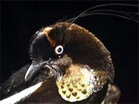 科技时代_新几内亚岛发现失落的世界 存在大量新物种