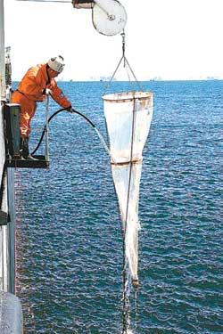 科技时代_南极科学考察队完成浮游生物调查(组图)