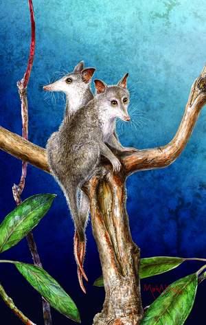 科技时代_我国出土新动物化石 前半身兽类后半身爬行