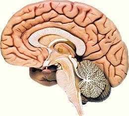 科技时代_日本研究发现常动脑有助于抑制脑细胞死亡