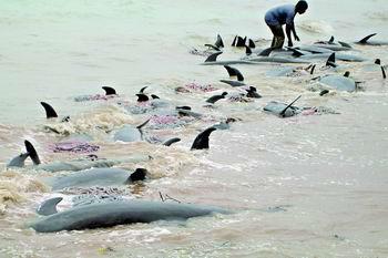科技时代_坦桑尼亚400海豚搁浅死亡