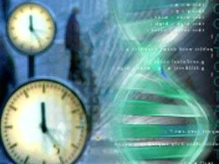科技时代_美国科学家研究发现人体生物钟工作规律(图)