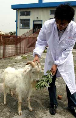 科技时代_上海交大干细胞研究获突破 人细胞种进山羊