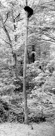 科技时代_美国一只7公斤家猫赶95公斤黑熊上树避难