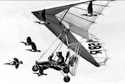 科技时代_法国气象学家开飞机带黑雁孤儿学飞翔(组图)