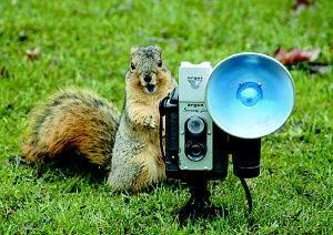 """科技时代_图文:野松鼠也""""玩""""照相机"""