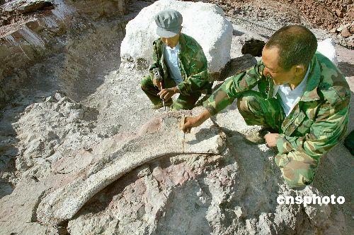 科技时代_亚洲最大恐龙化石在新疆奇台出土