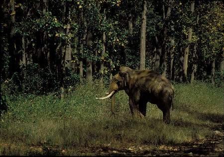 科技时代_WildAid:濒危动物亚洲象和非洲象