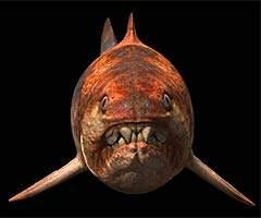 科技时代_科学家发现史前牙齿威力最猛的海洋鱼类(图)