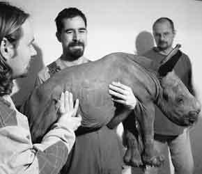 科技时代_世界首头人工授精犀牛诞生
