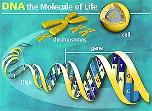 科技时代_基因检测诊病:高科技神话还是牟利骗局(图)