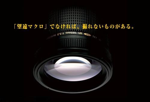 微距大炮腾龙AF180mmF/3.5镜头试用