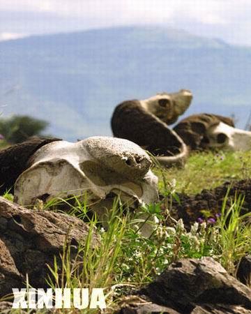 组图:非洲坦桑尼亚恩戈罗戈罗自然保护区(4)
