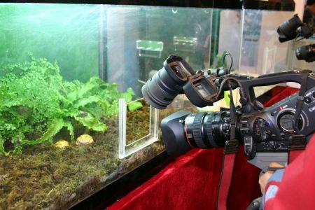 图文:高清摄像机拍摄玻璃箱中的蟾蜍