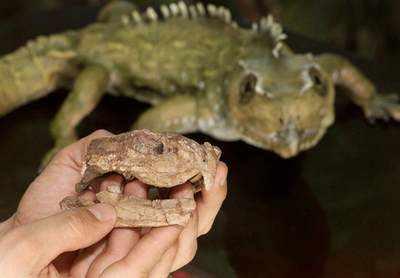 发现世界上最大的班点楔齿蜥化石(图)