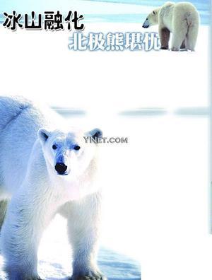 动物,它的食物来源主要是同样生活在冰山上的海狮