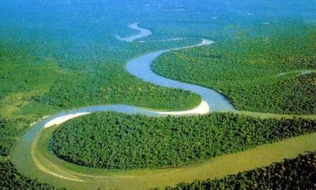 二氧化碳含量上升导致热带雨林生态发生巨变