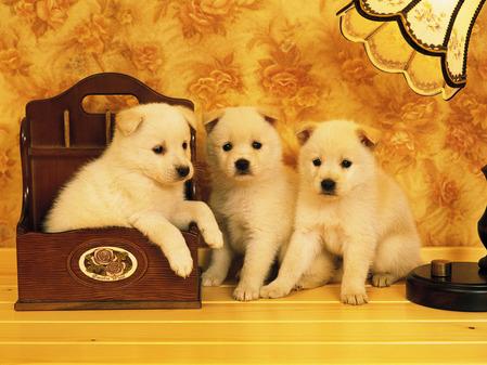 可爱狗狗宽屏1600x1200高清晰壁纸