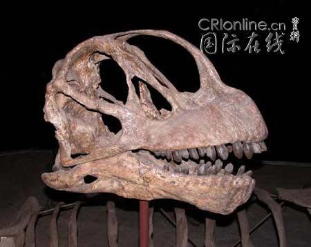 从霸王龙头骨到恐龙胚胎恐龙化石难得一见