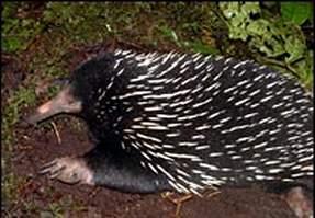 新几内亚岛发现失落的世界存在大量新物种