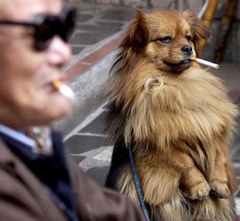 快乐单纯的动物世界:狗狗也会抽烟(组图)