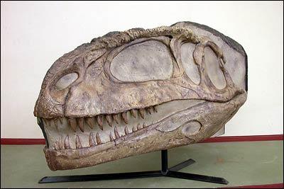 科学家发现比霸王龙更大的食肉恐龙化石(图)