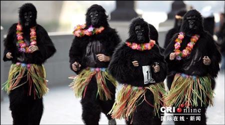 组图:英国举办大猩猩跑步比赛为动物筹款