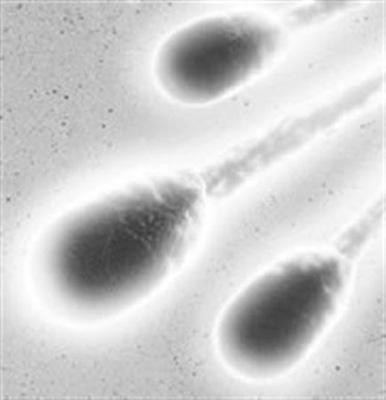 首次利用人造精子育出老鼠
