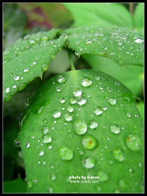 背景 壁纸 绿色 绿叶 树叶 植物 桌面 500_667 竖版 竖屏 手机
