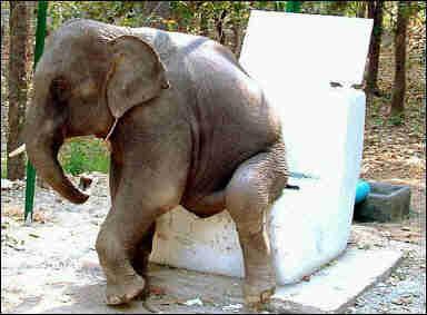 趣闻:小青蛙大吵夏威夷泰国大象文明如厕