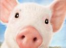 猪年祝您好运连绵不断