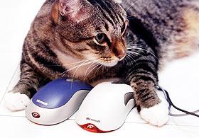 趣味测试:小神猫看透你的致命诱惑(图)