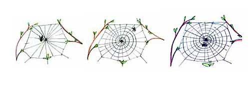 图为:蜘蛛网制作步骤4,5,6图片