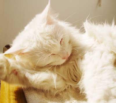 qq头像活泼可爱阳光抱着猫咪