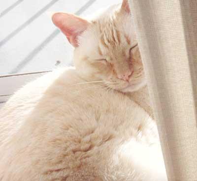 猫咪可爱的萌旳头像; 狐狸 太阳照着好舒服吧; 卡通 兄弟头像分享;