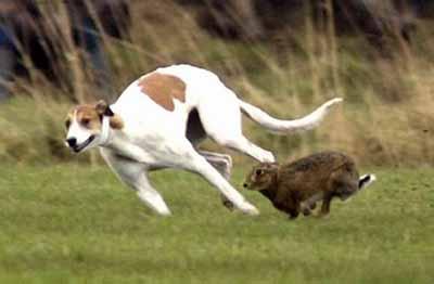 猎狗追兔子-格力 鸡兔猎犬