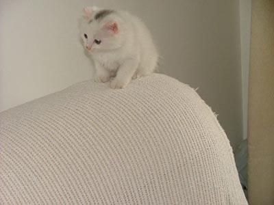 活泼可爱的小猫.