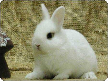 超可爱的兔兔宝贝