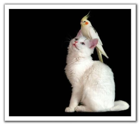 可爱的小动物们的搞笑起来实在是
