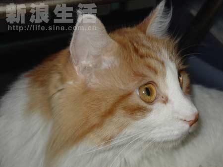 肥胖猫咪家的全家福(组图)